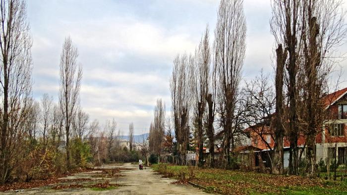 Drvored jablana u Rudešu uz bivšu željezničku prugu za kasarnu Prečko [VR 2013.]