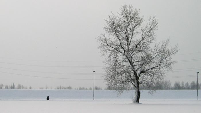 Područje rekreacijskog centra Jarun zimi [GP 2004.]