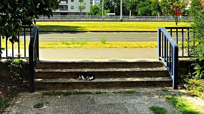 Stube u Zadarskoj ulici [GP 2015.]